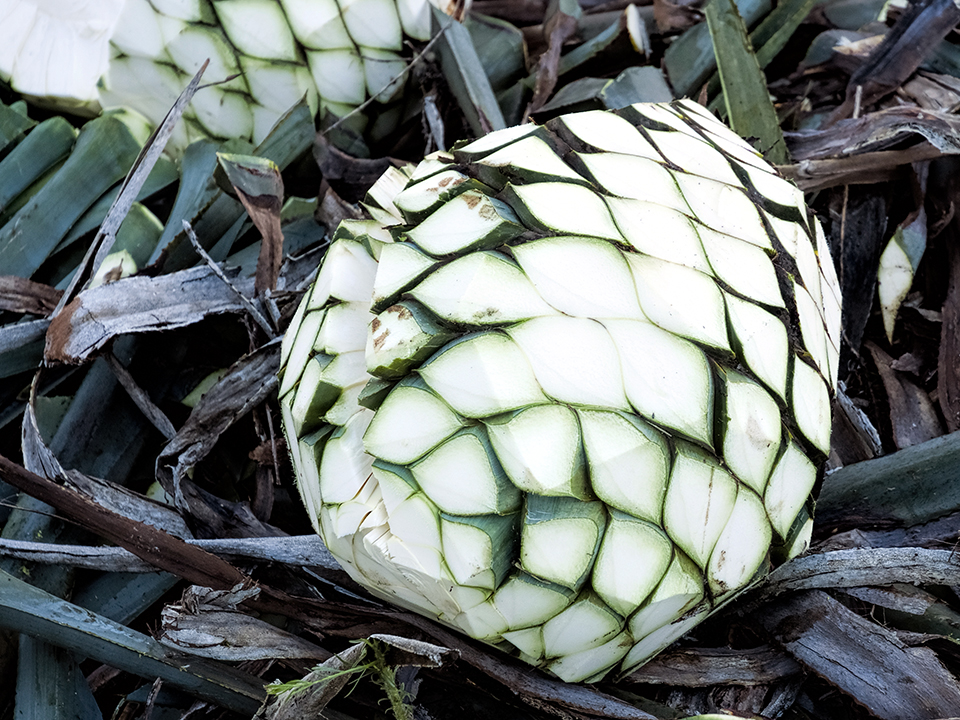 Agave Pina Cooking Methods (Tequila) ..... Including Diffuser